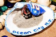 Miss Crustacean Contestant