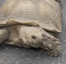 Alleged Tortoise Thief Defended By Smart Skeptical Mom