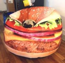 Cheeseburger Dog