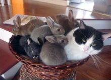 Unusual Bunny Family