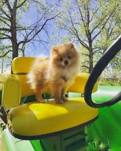 Lawn Mower Dog