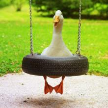 Swinging Goose