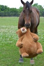 Horse and his Teddy Bear