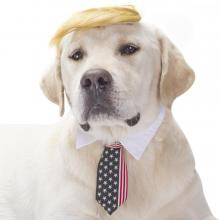 Fomate Trump Wig, Necktie, & Collar for Pets