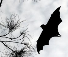 Eclipse Spooked Animals Causing Some To Go Batty