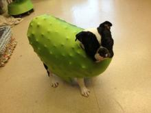 Pickle Pup