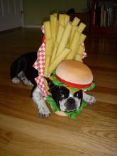 Burger and Fries Dog