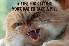 How to give your cat a pill