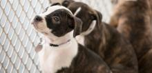 Eureka! California, First State To Mandate Pet Stores Sell Only Rescue Animals