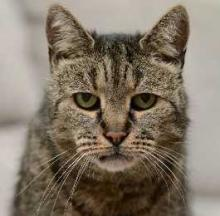 World's Oldest Cat 'Nutmeg' Off To Scratch Up The Pearly Gates
