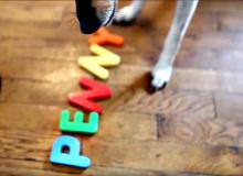 Penny the spelling dog (image via screen shot of Leonora Loggins' video)