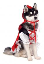 Top 10 Halloween Pet Costumes on Amazon