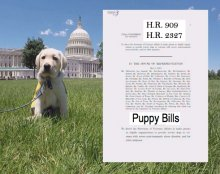 Bipartisan Puppy Bills Helping the Military & Abused Women