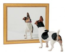 Mirror, Mirror On The Wall, Dogs Care Less About The Prettiest Of Them All