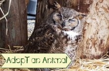 Adopting Wildlife Remotely On Long Island