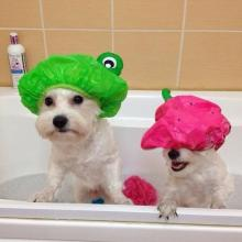 Bathtub Dogs
