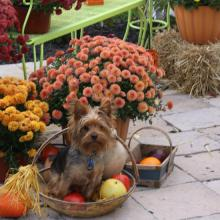 Use pumpkin & other seasonal ingredients for homemade dog treats