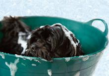 Tips for giving your dog a bath