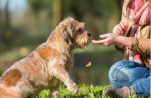 To Treat Or Not To Treat Your Dog