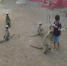 Fearless Child Plays With Wild Monkeys, Never Gets Bitten