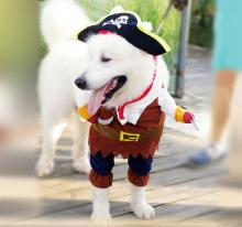 Swashbuckling pet accessories