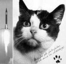 First Cat In Space Félicette To Be Celebrated With A Statue