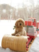 Present Delivery Pup