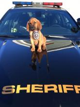 Keeping His Nose To The Ground, Sheriff's Bloodhound Seeks Name