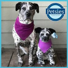 Custom-made stuffed animals by Petsies