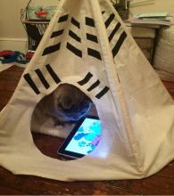 Cat using iPad in a teepee