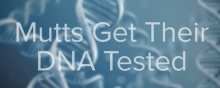 Mutts Get Their DNA Tested