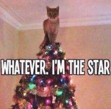 Top Cats: The Top 10 Cat & Kitten Christmas Tree Toppers