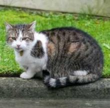 British First Cat Larry Struts His Stuff Outside 10 Downing Street
