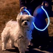 Glowing NiteyLeash could save you and your pet's lives