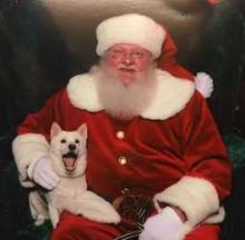 Santa Paws: The Top 10 Awkward, Uncomfortable & Unintentionally Hilarious Pets With Santa Photos