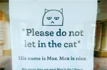 Max the Library Cat gets shut down (image by Rebecca Wingo)