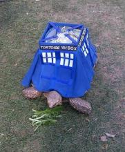 Doctor Who Turtle