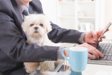 From Paternity To Pawternity Leave, Benefits Have Come A Long Way, Doggie!