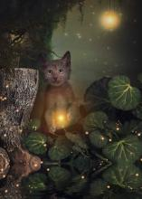 Lykoi Cat by Brittney Gobble (image via Lykoi Cats Facebook)