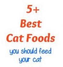 5 Best Cat Foods 2018