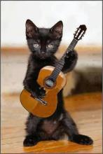 Guitar-Playing Kitten