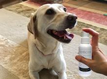 NonScents Dog Oral Spray