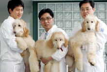 Cloning Your Dogs Before They Cross The Rainbow Bridge