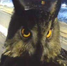 Finnish Traffic Camera Owl Don't Give A Hoot