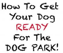 How to get your dog ready for the dog park!