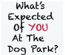 What's Expected of You At The Dog Park