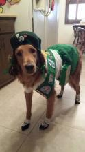 Girl Scout Dog