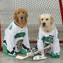 Hockey Pups