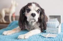 Acupuncture For Pets: Prickly Placebo Or Productive Procedure?