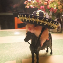 Mexican Hamster